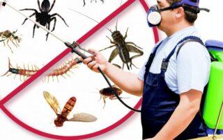 شركة رش حشرات في الفجيرة
