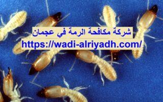 شركة مكافحة الرمة في عجمان