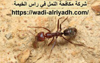 شركة مكافحة النمل في راس الخيمة